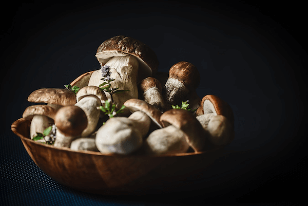 Medicinalsvampar